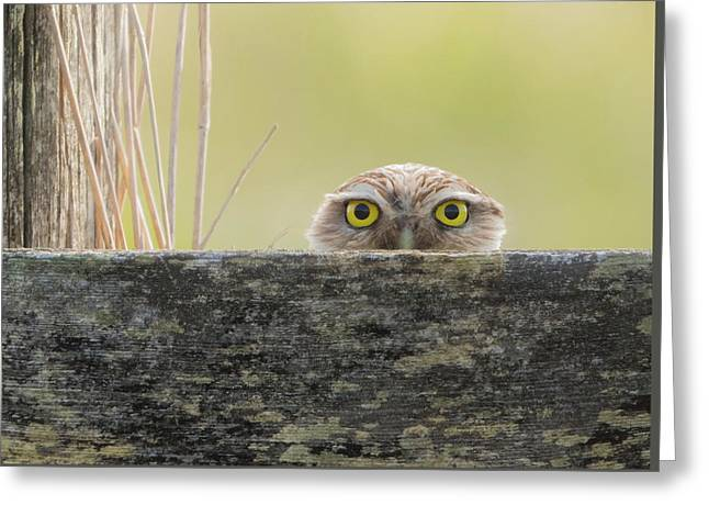 Peek A Boo Burrowing Owl Greeting Card by Angie Vogel