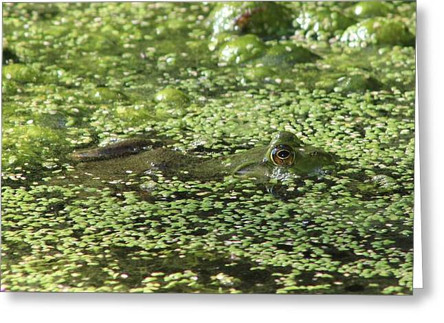 Aquatic Greeting Cards - Peek A Boo Frog Greeting Card by Karen Silvestri
