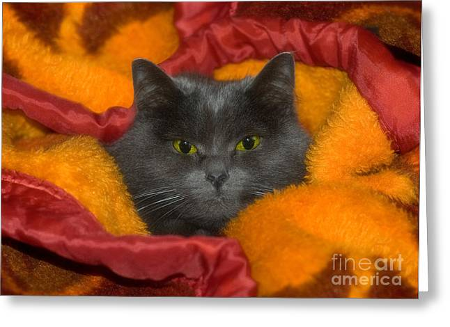 Veterinary Office Greeting Cards - Peek A Boo Greeting Card by Joann Vitali