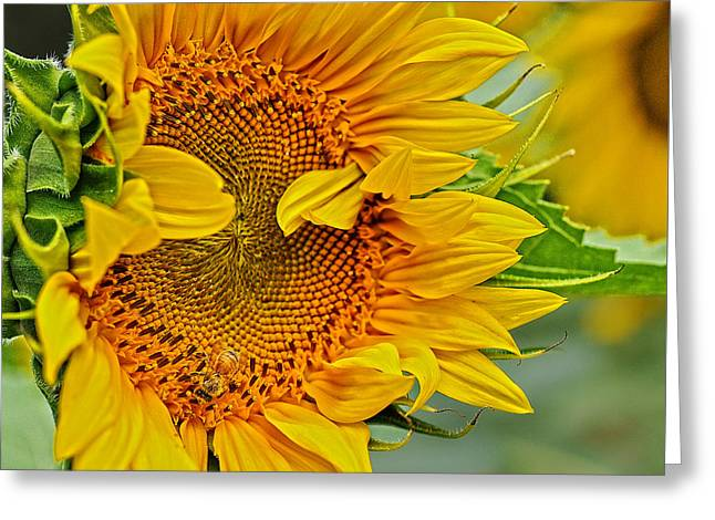 Buttonwood Farm Greeting Cards - Peek a Boo Greeting Card by Joanne Brown