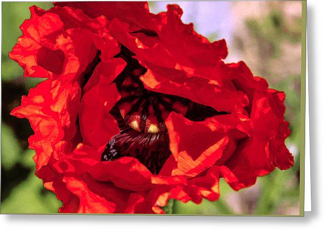 Nature Center Greeting Cards - Peek a boo Greeting Card by Susan Crossman Buscho