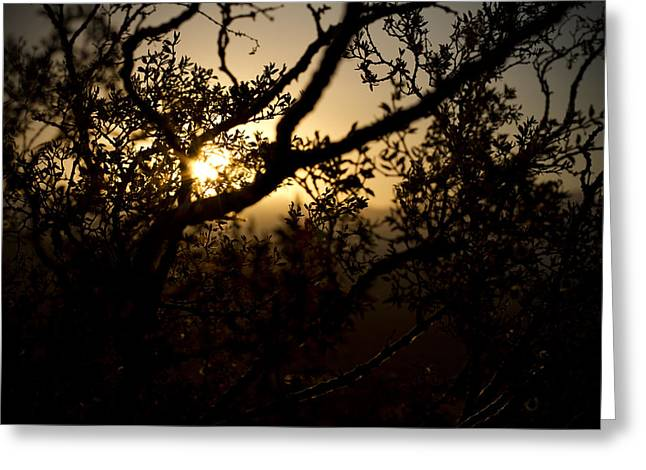 Mike Hill Greeting Cards - Peeking Sun Greeting Card by Mike Hill
