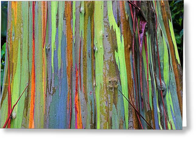 Sheds Greeting Cards - Peeling Bark- St Lucia. Greeting Card by Chester Williams