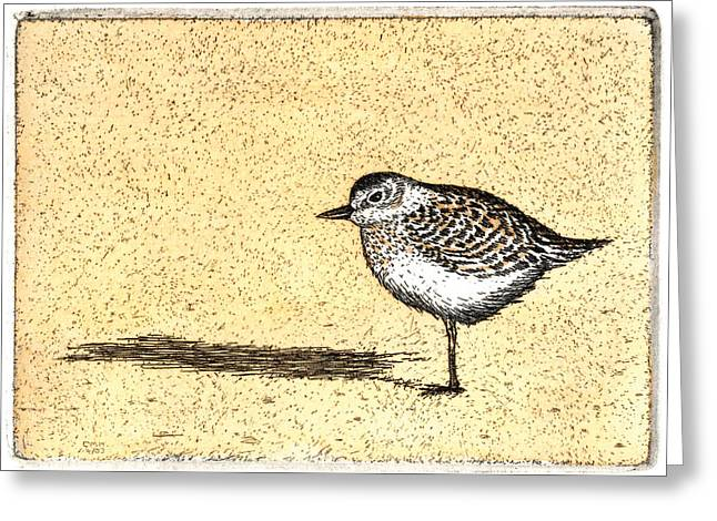 Ocean Shore Mixed Media Greeting Cards - Peep Greeting Card by Charles Harden