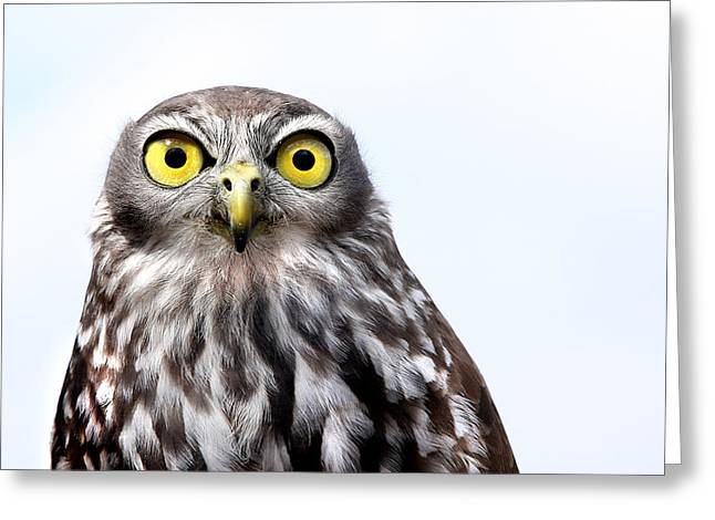 Peepers Greeting Card by Marion Cullen