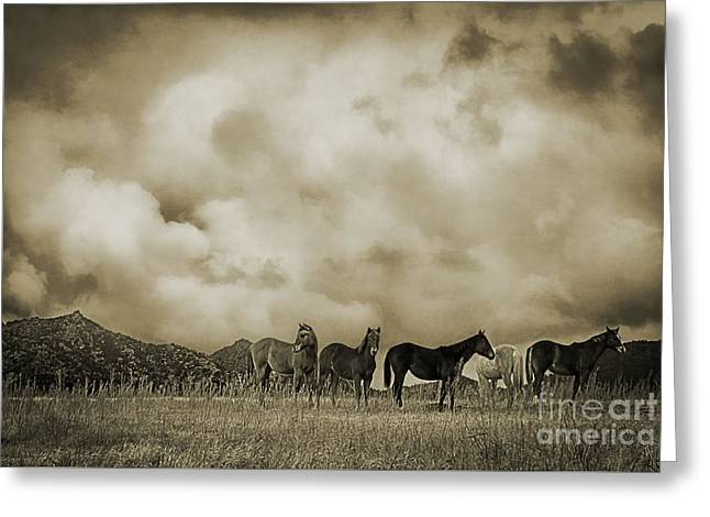 Turbulent Skies Greeting Cards - Peeples Valley Horses in Sepia Greeting Card by Priscilla Burgers