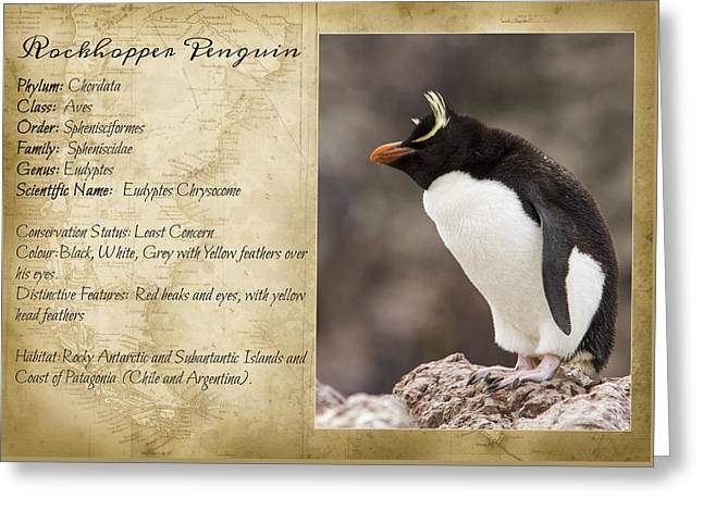 Eyebrow Greeting Cards - Peguin taxonomic card II Greeting Card by Hernan Caputo
