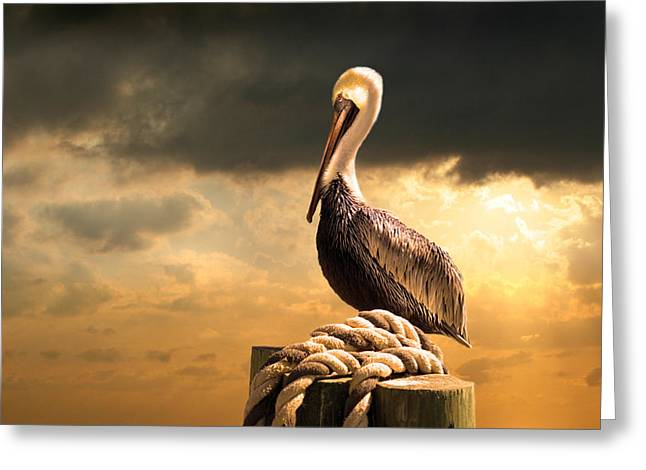 Bird Photographs Greeting Cards - Pelican after a storm Greeting Card by Mal Bray