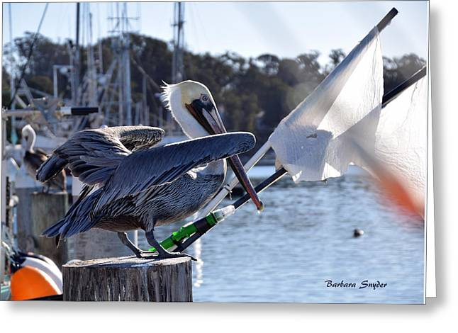 Pelican At Morro Bay California Ready For Take Off Greeting Card by Barbara Snyder