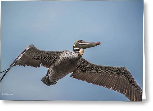 Sea Birds Greeting Cards - Pelican Briefly Greeting Card by Bill Roberts