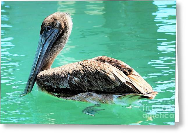 Pelican Curiosity Greeting Card by Diann Fisher