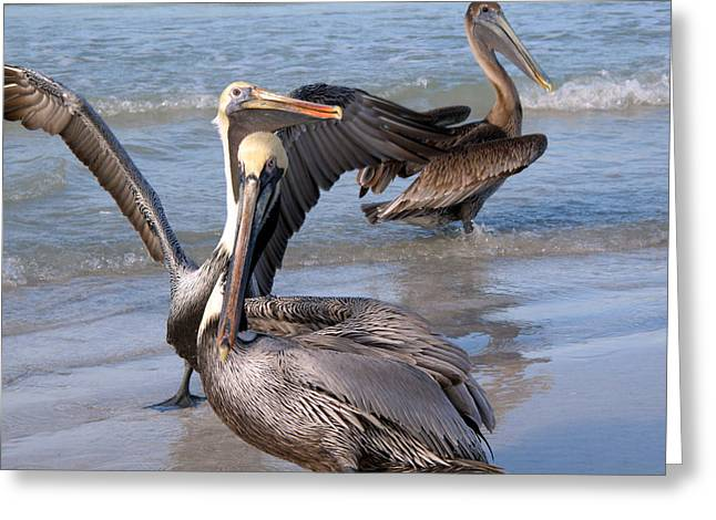 Florida Gifts Greeting Cards - Pelican Dance Greeting Card by Rose  Hill