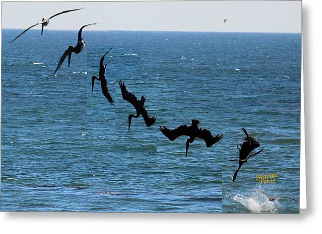 Diving In California Greeting Cards - Pelican Dive 7 photos in 2.5 Seconds Greeting Card by Gary Canant