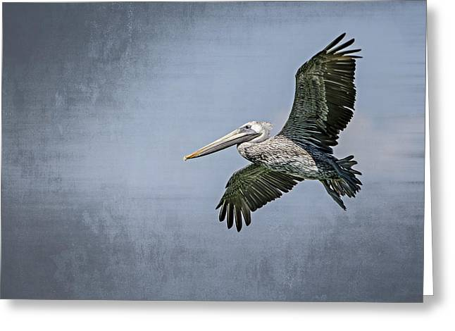 Pelican Flight Greeting Card by Carolyn Marshall