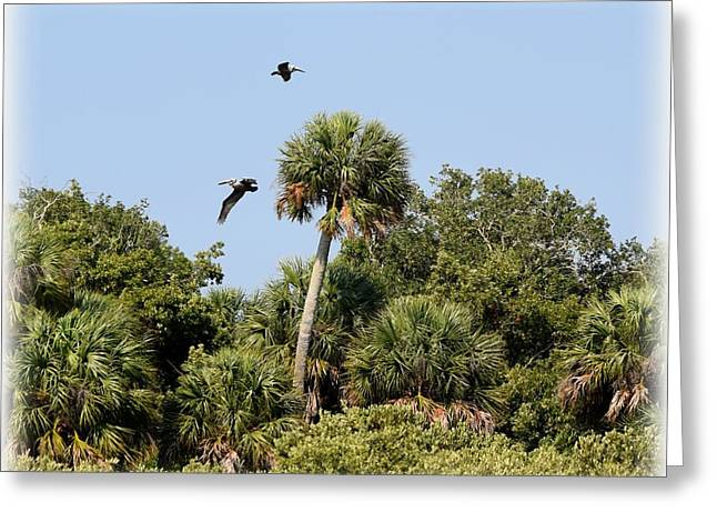Cedar Key Greeting Cards - Pelican Flyby  Greeting Card by Sheri McLeroy