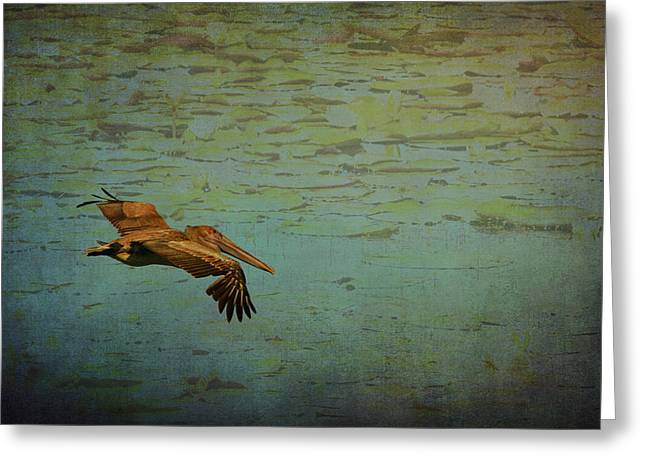Florida Panhandle Digital Art Greeting Cards - Pelican Gliding above the Lily Pond  Greeting Card by Carla Parris