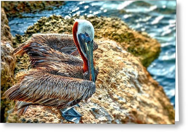 Pelican II Greeting Card by Carol R Montoya