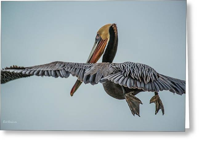 Sea Birds Greeting Cards - Pelican In Flight Greeting Card by Bill Roberts