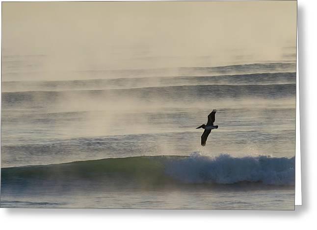 Ocean Art Photos Greeting Cards - Pelican in Sea Smoke Greeting Card by Paul Rebmann