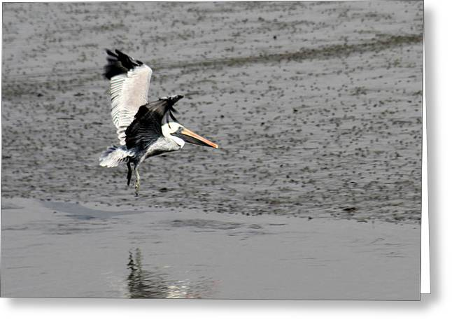 Reflections In River Greeting Cards - Pelican Landing Greeting Card by Shirley Robinson