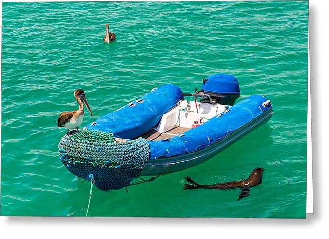 Sea Lions Greeting Cards - Pelican on a Dinghy Greeting Card by Jess Kraft