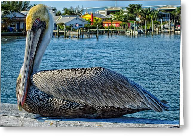 Anna Maria Island Greeting Cards - Pelican On Anna Maria Island Florida Greeting Card by Vania Lex200