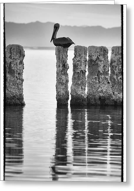 Sonny Bono Greeting Cards - Pelican Perch II Greeting Card by Linda Dunn