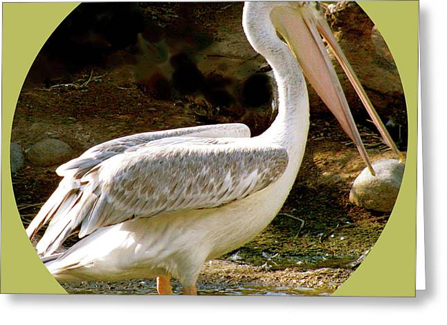 Flocks Of Birds Mixed Media Greeting Cards - Pelican Portal Greeting Card by Debra     Vatalaro