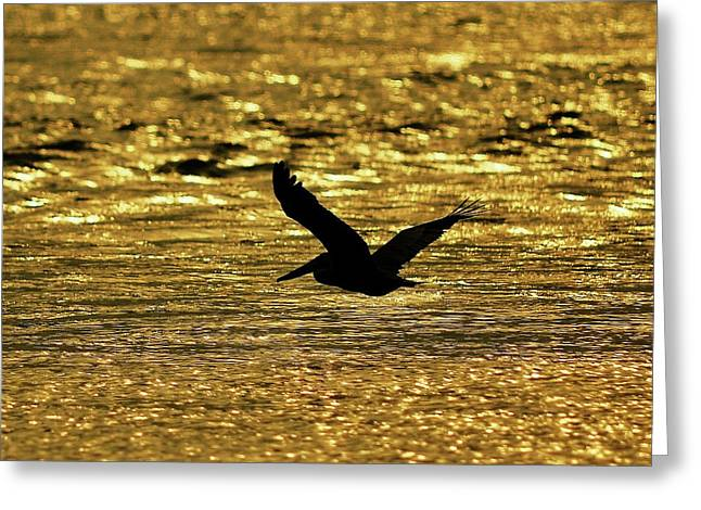 Al Powell Photography Usa Greeting Cards - Pelican Silhouette - Golden Gulf Greeting Card by Al Powell Photography USA