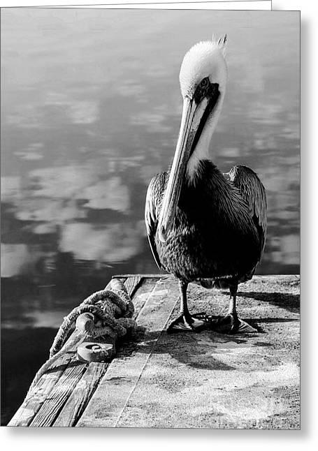 Cedar Key Greeting Cards - Pelican Standing on Dock Greeting Card by Lynn Palmer