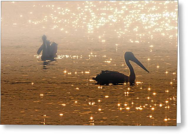Avian Greeting Cards - Pelican Sunrise Greeting Card by Mike  Dawson
