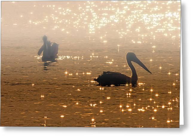 Pelican Sunrise Greeting Card by Mike  Dawson