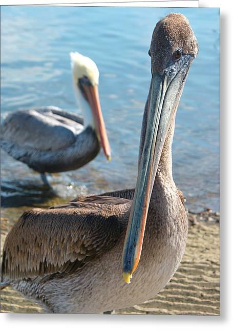 Ocen Landscape Greeting Cards - Pelican The Brave Greeting Card by Ava Stepniewska PixelogyStudios