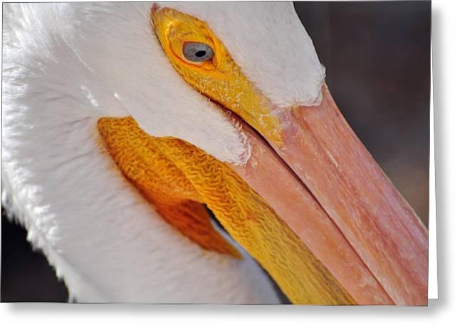 Pelican Twist Greeting Card by Marty Koch