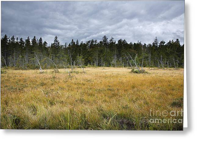 New Hampshire Logging Greeting Cards - Pemigewasset Wilderness - Lincoln New Hampshire USA Greeting Card by Erin Paul Donovan