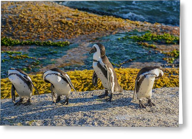 Simons Town Greeting Cards - Penguin Morning Inspection Greeting Card by Catherine Withers-Clarke