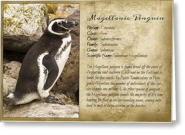 Eyebrow Greeting Cards - Penguin taxonomic card III Greeting Card by Hernan Caputo
