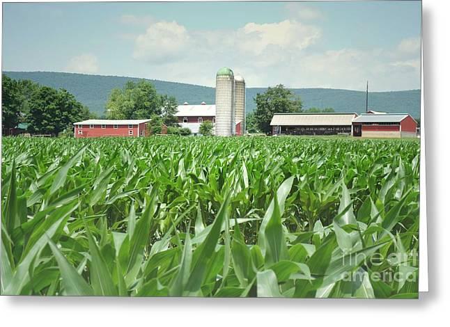 Pennsylvania Barns Greeting Cards - Pennsylvania Cornfield Farm Greeting Card by Andrea Hazel Ihlefeld