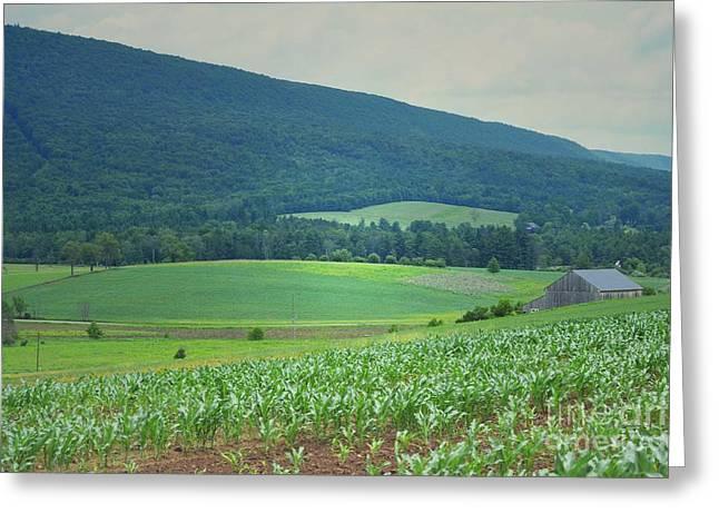 Pennsylvania Barns Greeting Cards - Pennsylvania Countryside Barn Greeting Card by Andrea Hazel Ihlefeld