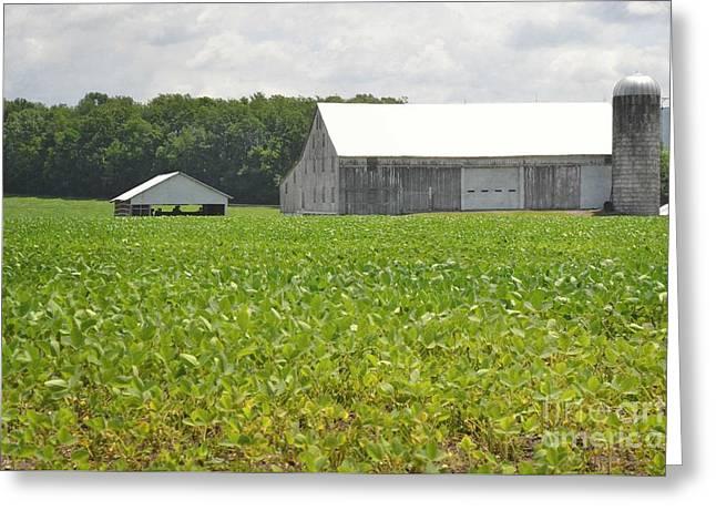 Pennsylvania Barns Greeting Cards - Pennsylvania Farm Field Landscape Greeting Card by Andrea Hazel Ihlefeld