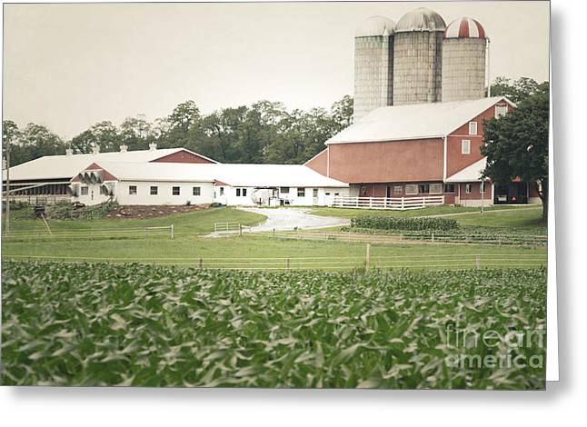 Cornfield Greeting Cards - Pennsylvania Red Barn Rustic Cornfield Greeting Card by Andrea Hazel Ihlefeld
