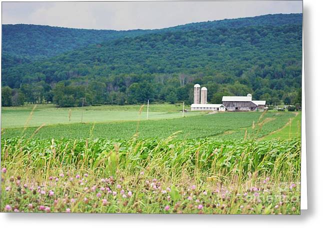 Barn Door Greeting Cards - Pennsylvania Rolling Hills Barn Greeting Card by Andrea Hazel Ihlefeld