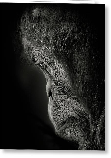 Orangutan Photographs Greeting Cards - Pensive Greeting Card by Animus Photography