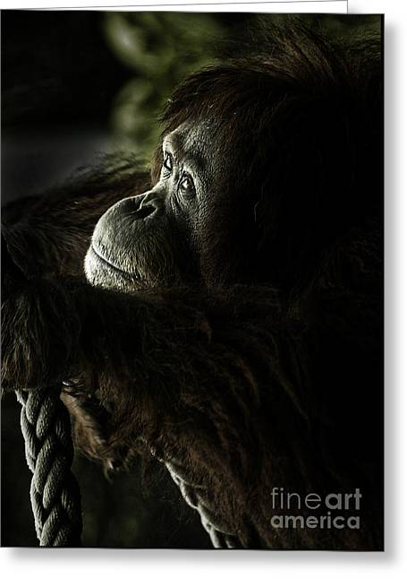 Orang-utans Greeting Cards - Pensive orang utan Greeting Card by Sheila Smart