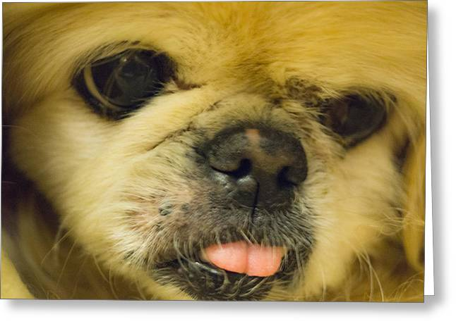 Puppies Photographs Greeting Cards - Pensive Pup Greeting Card by Craig Morrison