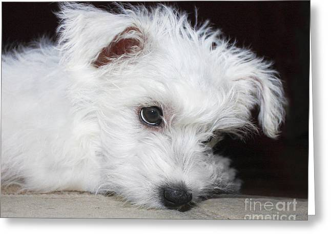 Pensive Greeting Cards - Pensive Puppy Greeting Card by Terri  Waters