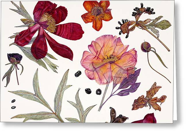 In Bloom Greeting Cards - Peony Specimens Greeting Card by Rachel Pedder-Smith
