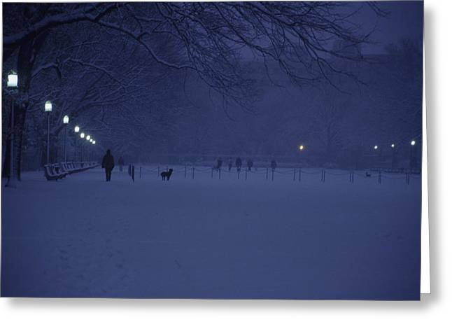 Dog Park Greeting Cards - People Walk Their Dogs Greeting Card by Stacy Gold