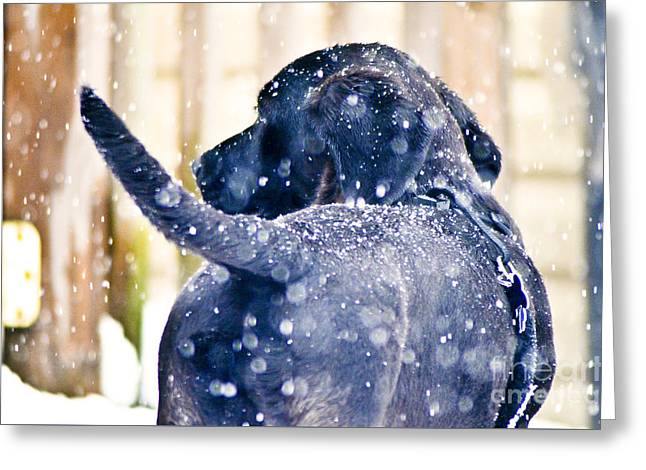 Puppies Photographs Greeting Cards - Pepper and the snow storm Greeting Card by PatriZio M Busnel