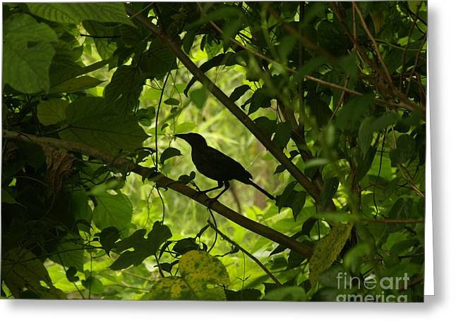 Perched in Green  Greeting Card by Jack Norton
